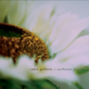 Robin Guthrie - Sunflower Stories
